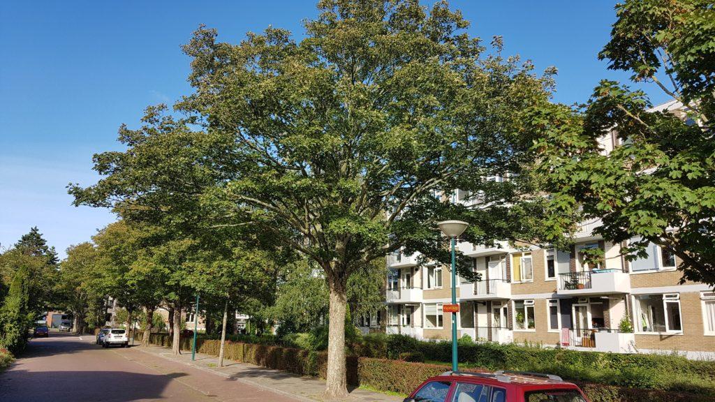 Bomen in de Bloemenbuurt in Oegstgeest